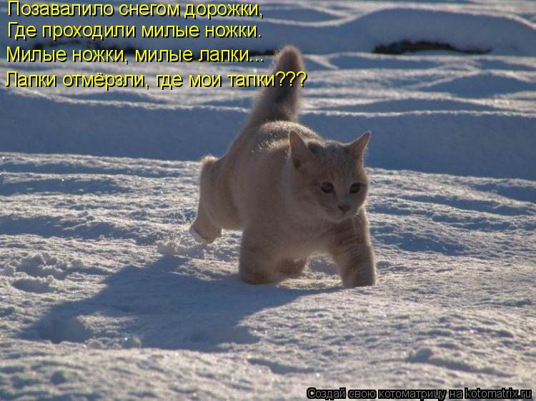 Котоматрица: Позавалило снегом дорожки, Где проходили милые ножки. Милые ножки, милые лапки... Лапки отмёрзли, где мои тапки???