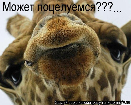 Котоматрица: Может поцелуемся??? ...