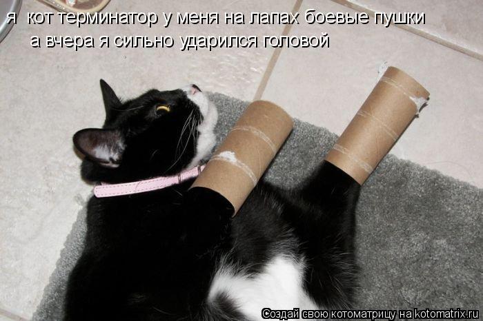Котоматрица: я  кот терминатор у меня на лапах боевые пушки а вчера я сильно ударился головой
