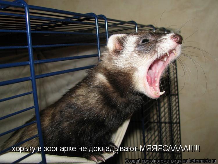 Котоматрица: хорьку в зоопарке не докладывают МЯЯЯСАААА!!!!!