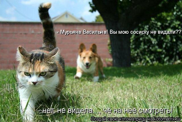 Котоматрица: - Мурьяна Васильна! Вы мою сосиску не видали??? - нет, не видела..., чё на неё смотреть!