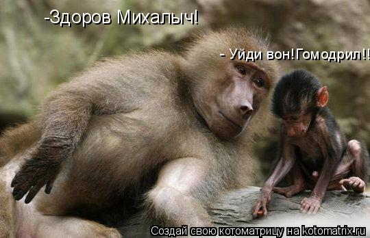 Котоматрица: -Здоров Михалыч! - Уйди вон!Гомодрил!!!