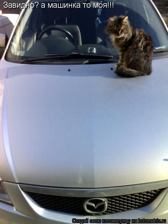 Котоматрица: Завидно? а машинка то моя!!!