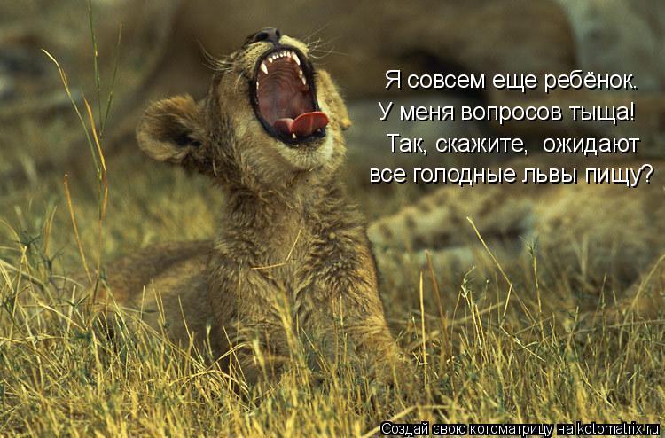 Котоматрица: Я совсем еще ребёнок. У меня вопросов тыща! Так, скажите,  ожидают  все голодные львы пищу?