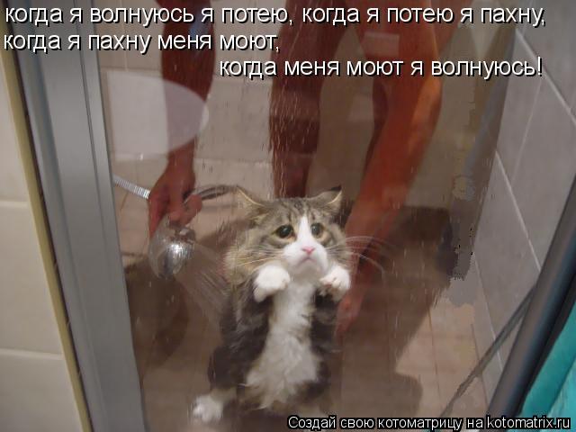 Котоматрица: когда я волнуюсь я потею, когда я потею я пахну, когда я пахну меня моют, когда меня моют я волнуюсь!
