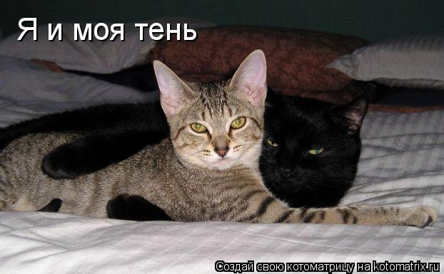 Котоматрица: Я и моя тень