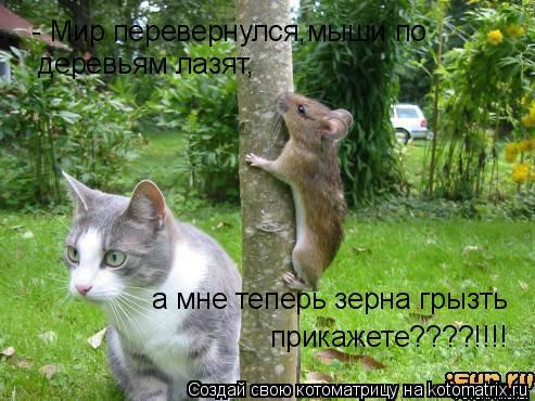 Котоматрица: - Мир перевернулся,мыши по  деревьям лазят, а мне теперь зерна грызть прикажете????!!!!