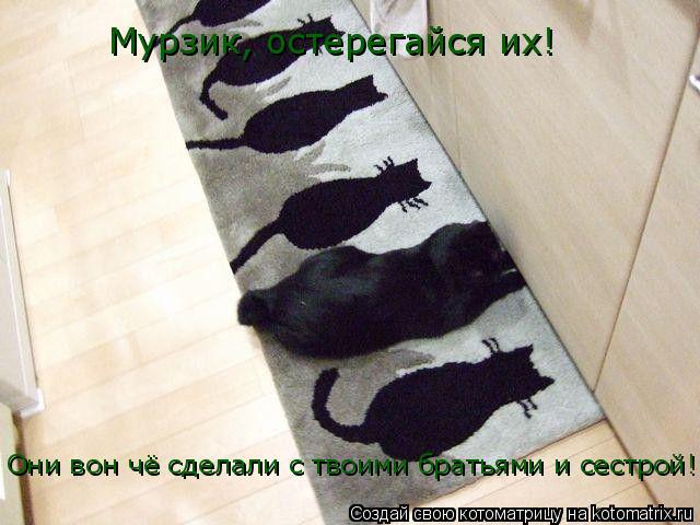 Котоматрица: Мурзик, остерегайся их!  Они вон чё сделали с твоими братьями и сестрой!