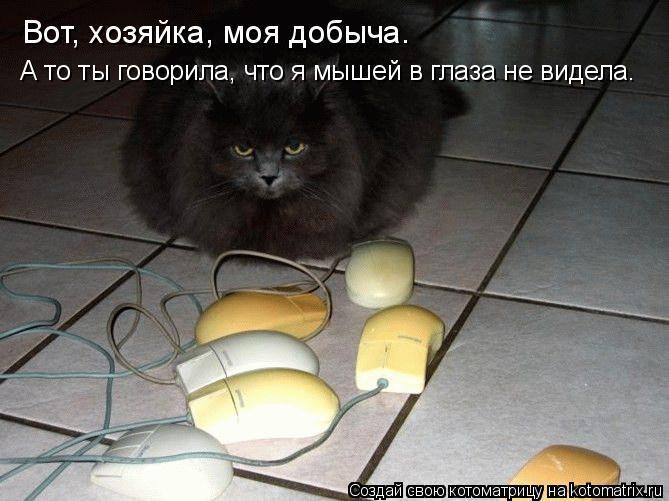Котоматрица: Вот, хозяйка, моя добыча. А то ты говорила, что я мышей в глаза не видела.
