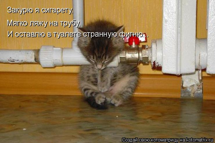 Котоматрица: Закурю я сигарету, Мягко ляжу на трубу, И оставлю в туалете странную фигню...