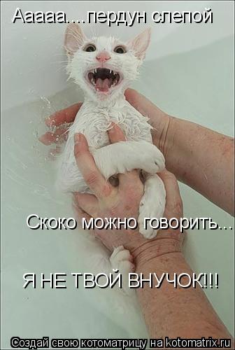 Котоматрица: Ааааа....пердун слепой Скоко можно говорить... Я НЕ ТВОЙ ВНУЧОК!!!
