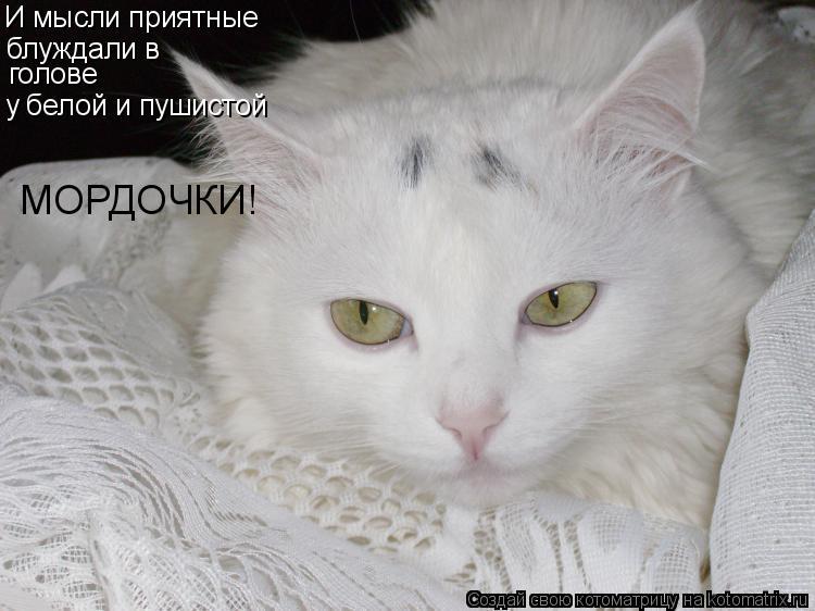 Котоматрица: И мысли приятные блуждали в  голове у белой и пушистой МОРДОЧКИ!