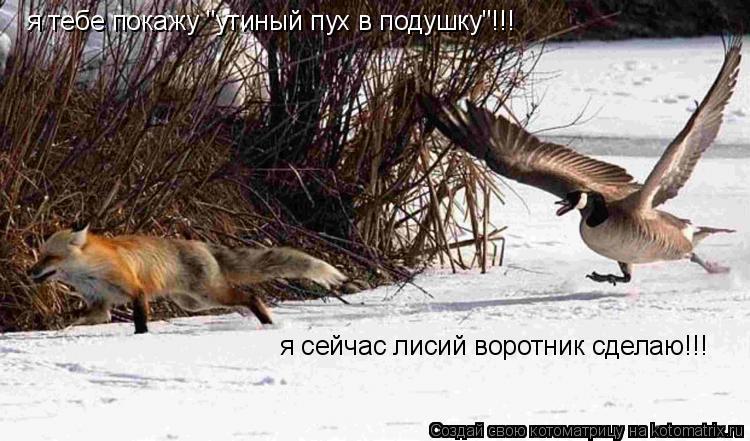 """Котоматрица: я тебе покажу """"утиный пух в подушку""""!!! я сейчас лисий воротник сделаю!!!"""