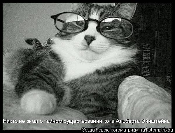 Котоматрица: Никто не знал о тайном существовании кота Альберта Эйнштейна