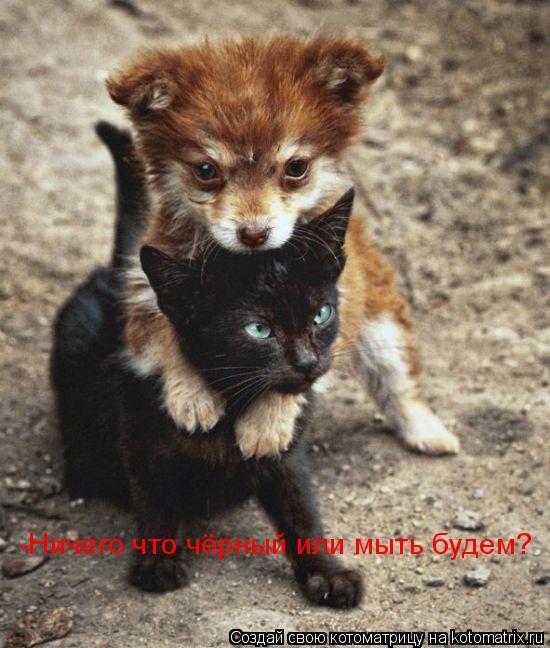 Котоматрица: -Сказали ловить котов -Ничего что чёрный или мыть будем?