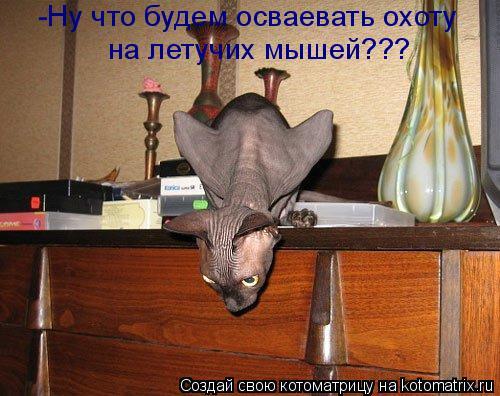 Котоматрица: -Ну что будем осваевать охоту на летучих мышей???