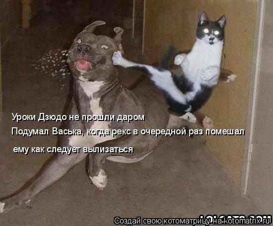 Котоматрица: Уроки Дзюдо не прошли даром Подумал Васька, когда рекс в очередной раз помешал  ему как следует вылизаться