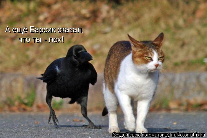 Котоматрица: А ещё Барсик сказал, что ты - лох!