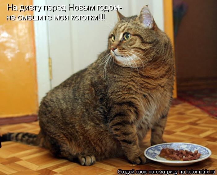 Котоматрица: На диету перед Новым годом- не смешите мои коготки!!!