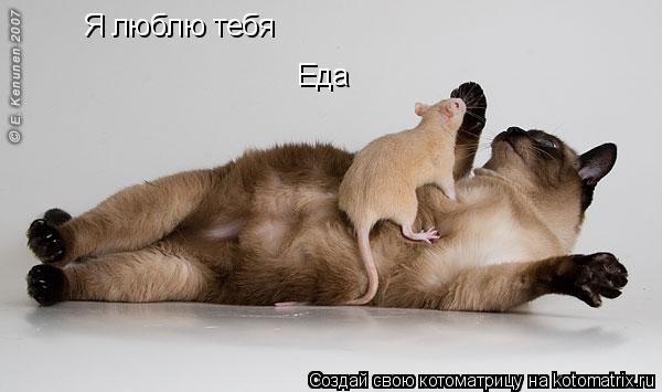 Котоматрица: Я люблю тебя Еда