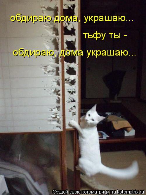 Котоматрица: обдираю дома, украшаю... обдираю, дома украшаю... тьфу ты -