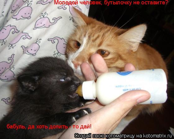 Котоматрица: Молодой человек, бутылочку не оставите?  бабуль, да хоть допить - то дай!