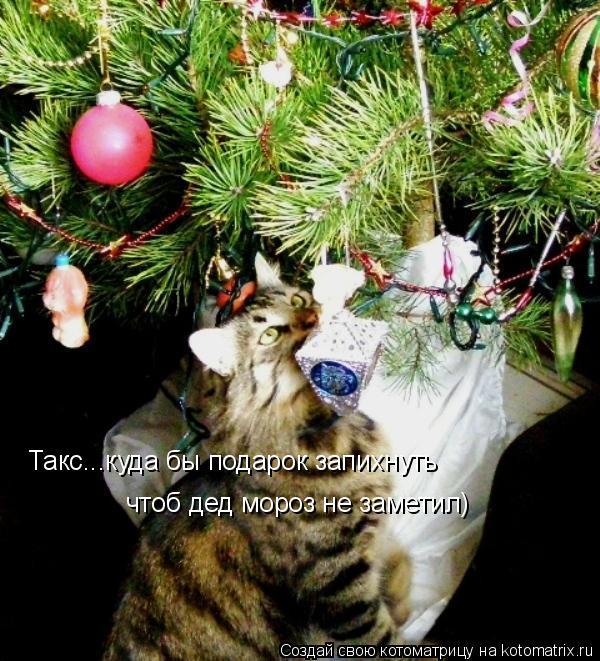 Котоматрица: Такс...куда бы подарок запихнуть чтоб дед мороз не заметил)
