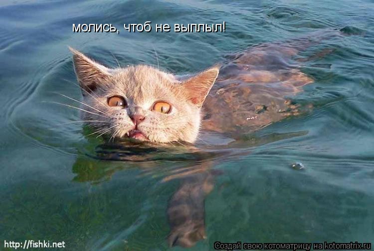 Котоматрица: молись, чтоб не выплыл!