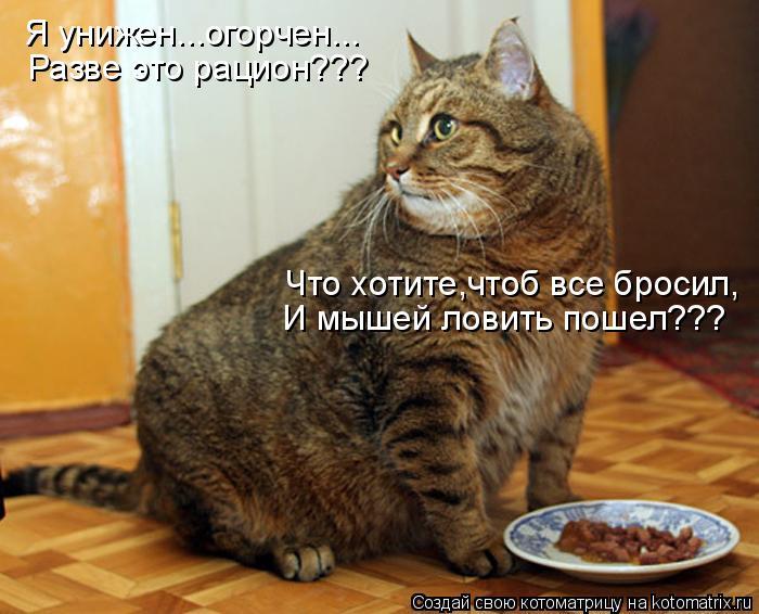 Котоматрица: Я унижен...огорчен... Разве это рацион??? Что хотите,чтоб все бросил, И мышей ловить пошел???
