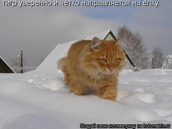 Котоматрица: тигр уверенно и чётко направляется на ёлку.
