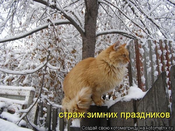 Котоматрица: страж зимних праздников
