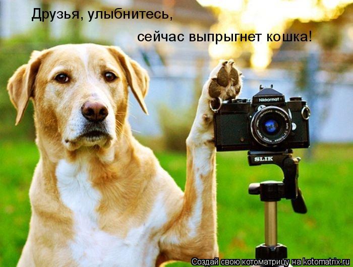 Котоматрица: Друзья, улыбнитесь, сейчас выпрыгнет кошка!