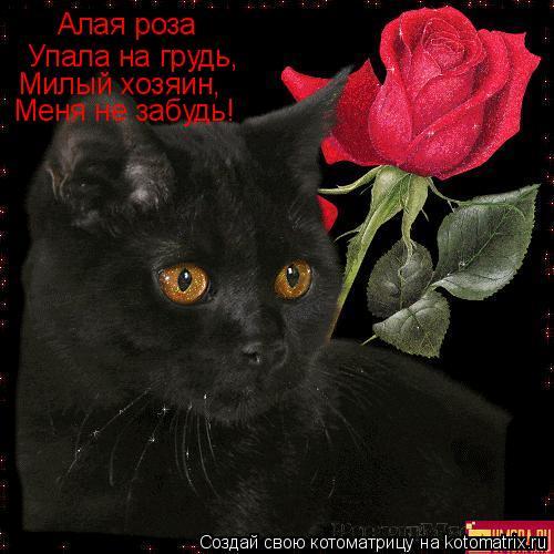 Котоматрица: Алая роза Упала на грудь, Милый хозяин, Меня не забудь!
