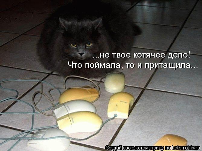 Котоматрица: ...не твое котячее дело! Что поймала, то и притащила...