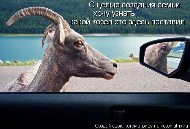 Котоматрица: С целью создания семьи,  хочу узнать,  какой козел это здесь поставил