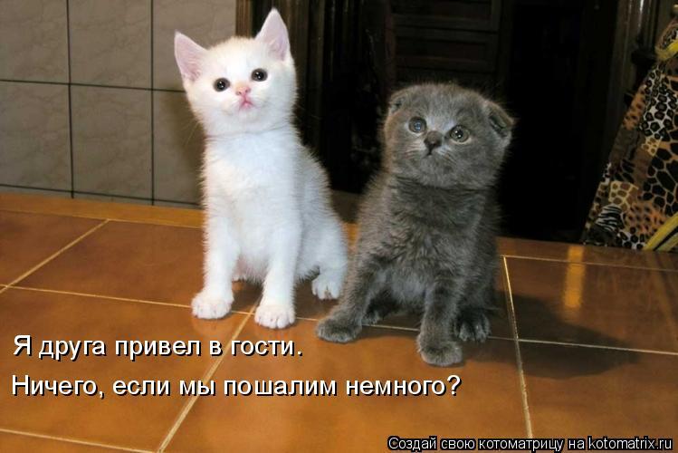 Котоматрица: Я друга привел в гости. Ничего, если мы пошалим немного?