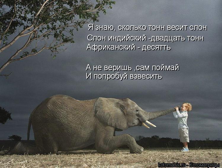 Котоматрица: Я знаю, сколько тонн весит слон Слон индийский -двадцать тонн Африканский - десятть А не веришь ,сам поймай И попробуй взвесить