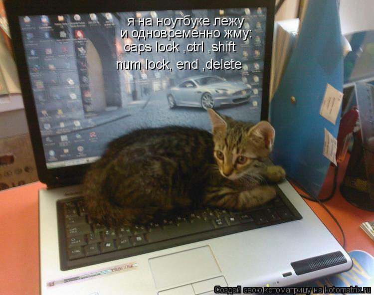Котоматрица: я на ноутбуке лежу и одновременно жму: num lock, end ,delete caps lock ,ctrl ,shift