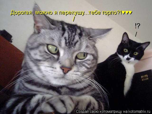 Котоматрица: / !? / Дорогая, можно я перекушу...тебе горло?!♥♥♥