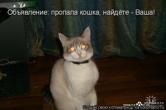 Котоматрица: Объявление: пропала кошка, найдёте - Ваша!