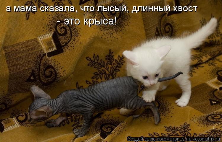 Котоматрица: а мама сказала, что лысый, длинный хвост  - это крыса!