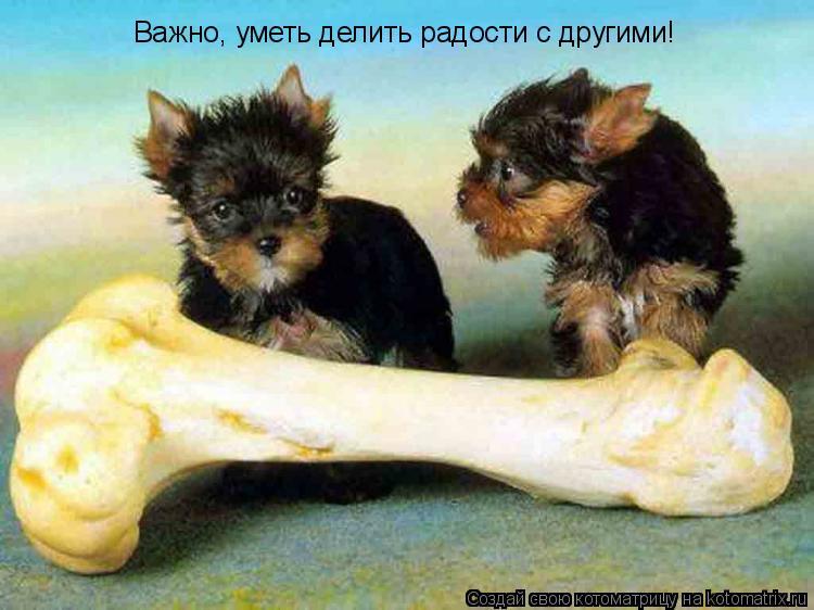 Котоматрица: Важно, уметь делить радости с другими!