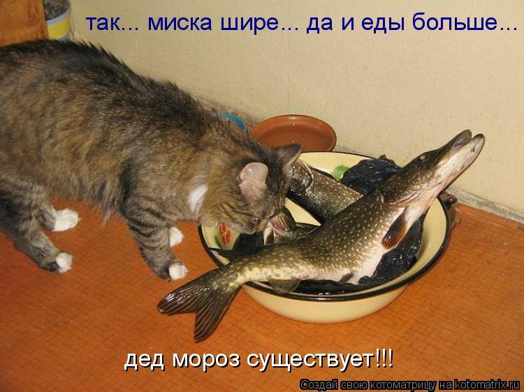 Котоматрица: дед мороз существует!!!  так... миска шире... да и еды больше...