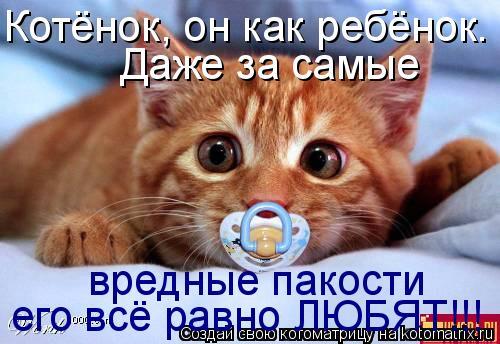 Котоматрица: Котёнок, он как ребёнок. Даже за самые  вредные пакости его всё равно ЛЮБЯТ!!!