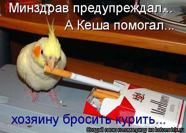 Котоматрица: хозяину бросить курить... Минздрав предупреждал... А Кеша помогал...