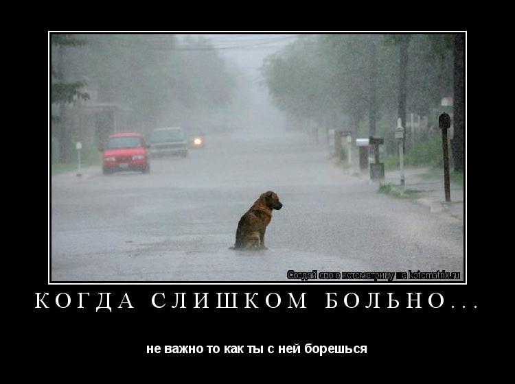 Котоматрица: Когда слишком больно... не важно то как ты с ней борешься