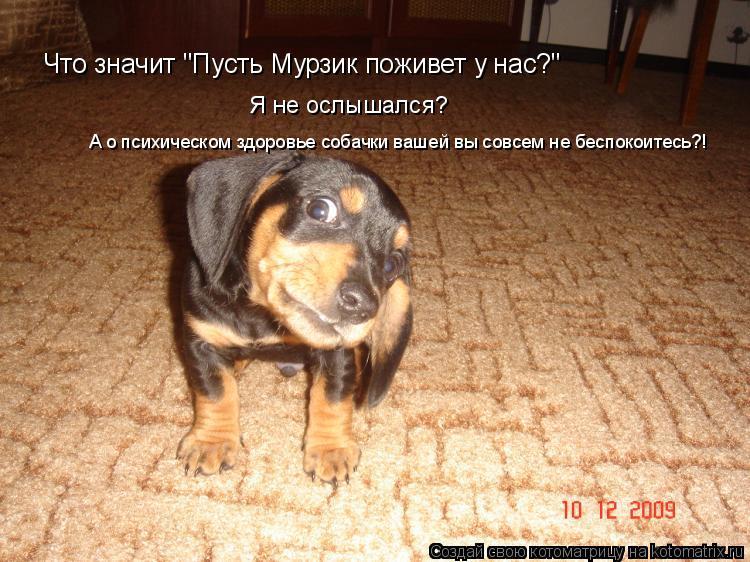 """Котоматрица: Что значит """"Пусть Мурзик поживет у нас?"""" А о психическом здоровье собачки вашей вы совсем не беспокоитесь?! Я не ослышался?"""