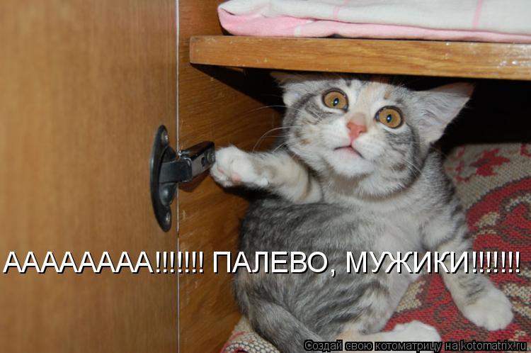 Котоматрица: АААААААА!!!!!!! ПАЛЕВО, МУЖИКИ!!!!!!!