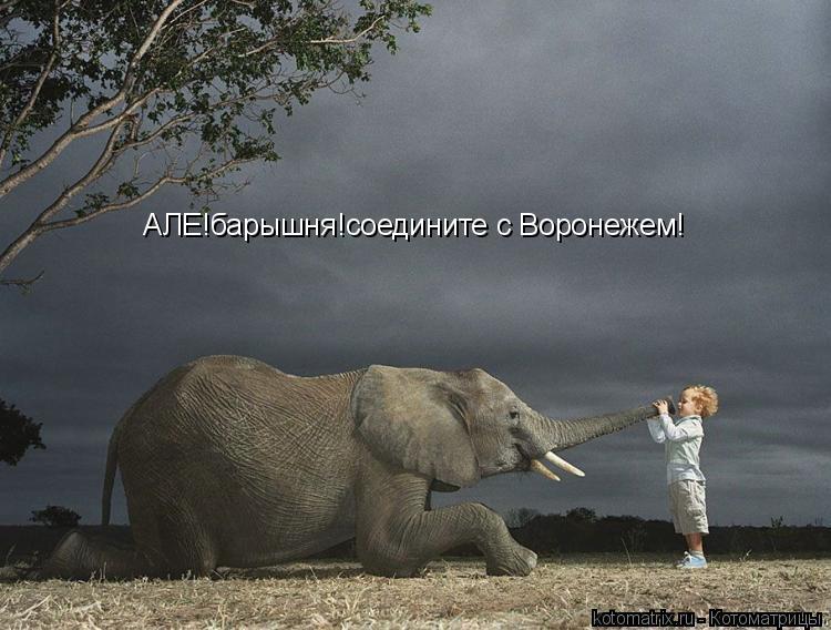 Котоматрица: АЛЕ!барышня!соедините с Воронежем!