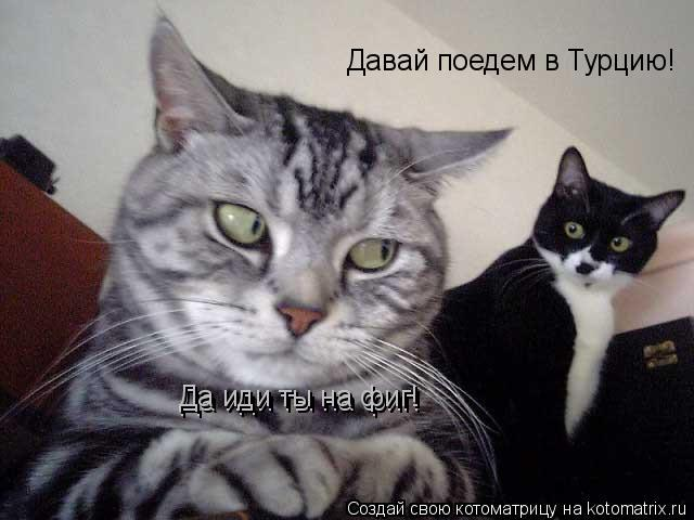 Котоматрица: Давай поедем в Турцию! Да иди ты на фиг! Да иди ты на фиг!